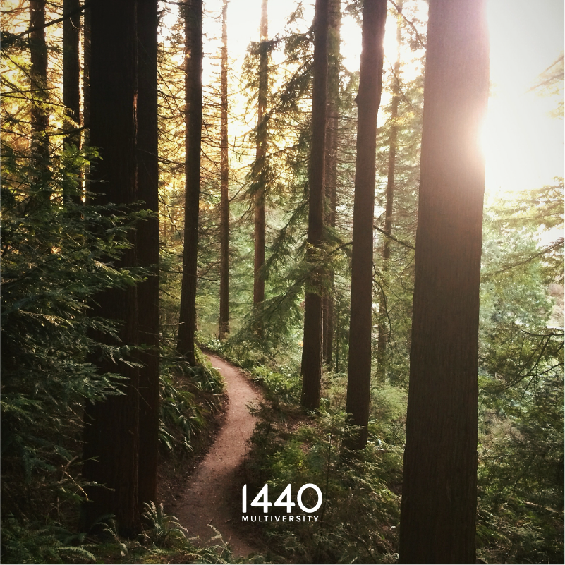 redwood_trail_1440MV_FB_IG